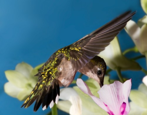 Photo Guide with Hummingbird photo tips