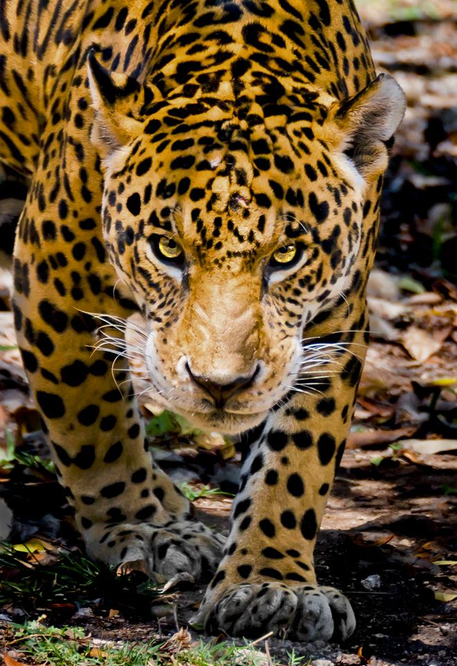 My Wildlife Favorites Gallery Firefall Photography