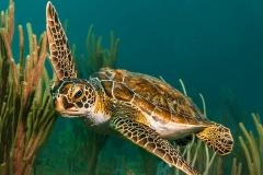 My New Dive Buddy
