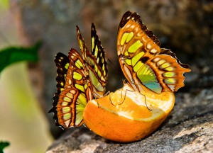 Butterflies at Xcaret Park in Cozumel Cancun Mexico