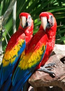 Parrots at Xcaret, Nexico
