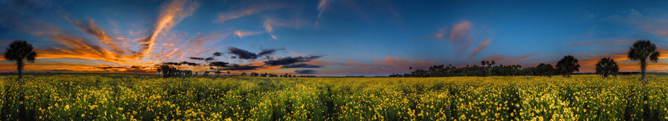 Lake Jesup Sunflower Photo Tips