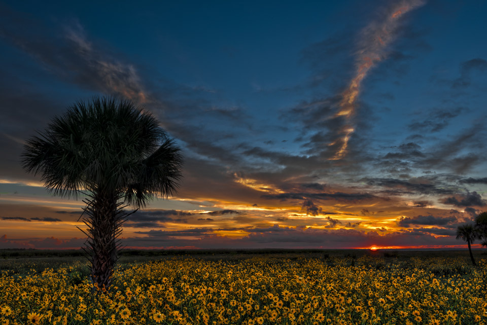 Lake Jessup Sunflower Photo Tips and Guide