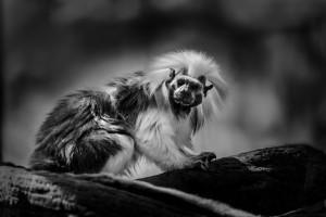 Brevard Zoo Photo Tips