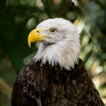 Brevard Zoo Photo Tips