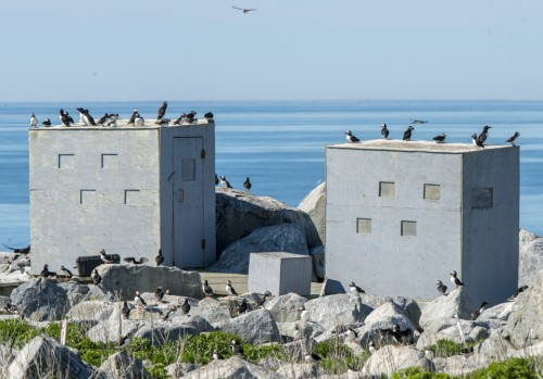 Peaking at Puffins:  Tips for Puffin Photo Tours on Machias Seal Island