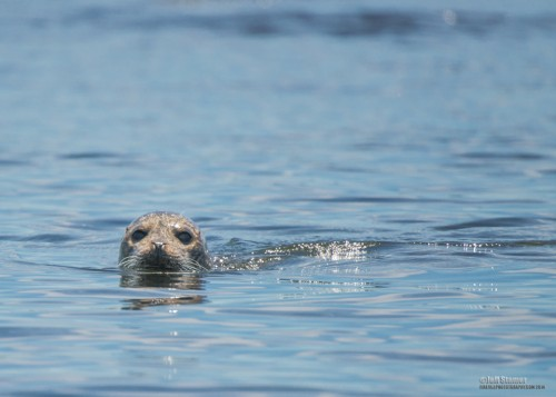 You will likely see a number of seals in the waters off the island...