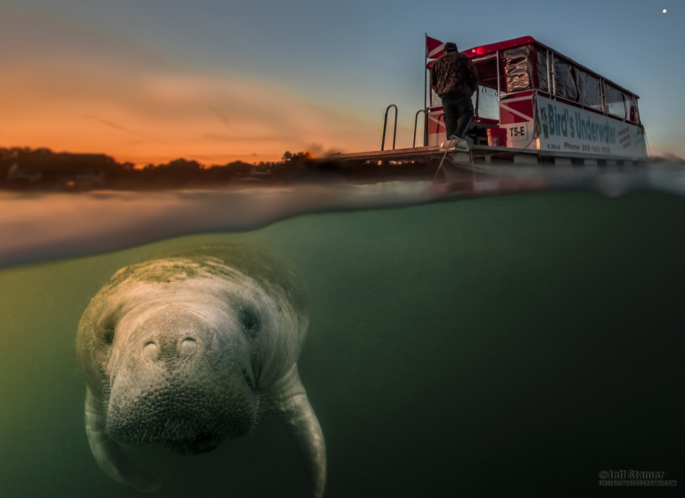 Crystal River Manatee Photography Trip