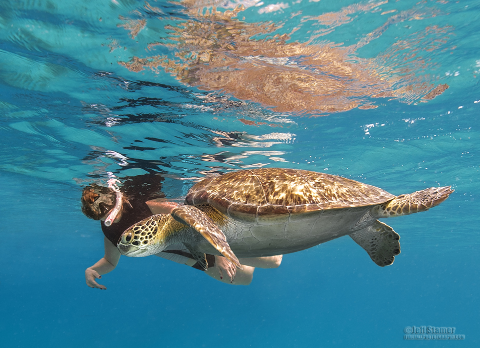 Busting the Turtle Jinx:  Photographing Caribbean Sea Turtles