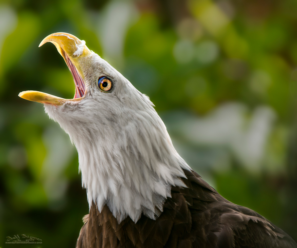 Audubon Bird of Prey Center:  Photography Tips