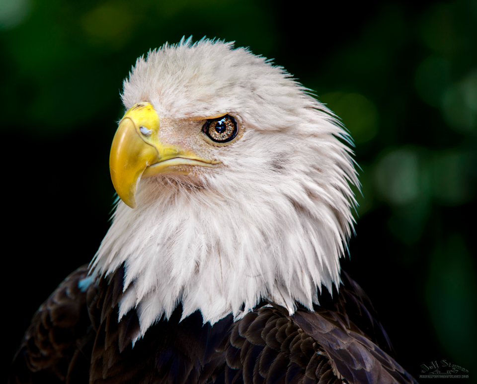 Audubon Bird of Prey Center:  Photography Tips