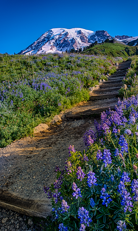 Wildflowers on Trails near Paradise Inn at Mt. Rainier