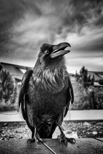 2016 SW Grand Canyon 03 11 2515 Raven