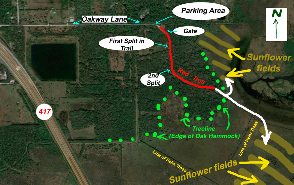 Lake Jesup Sunflower Field Bloom Update: Sept. 27, 2016