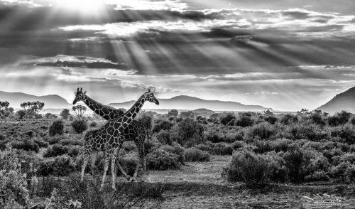 2016-kenya-11-07-01571-bw