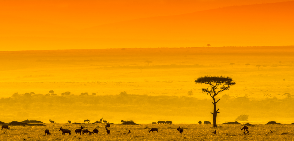 My Kenya Photo Safari with Wild4 Photo Safaris