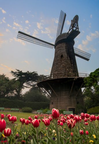 How often do you get to photograph old windmills? A early morning shot in Golden Gate Park