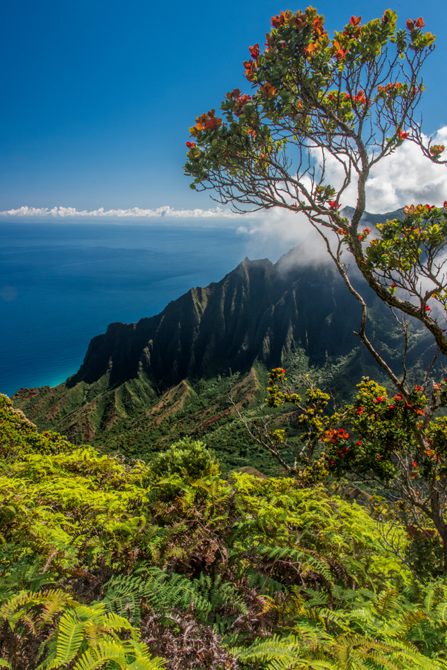Kauai and Big Island Photo Locations Kalepa Ridge