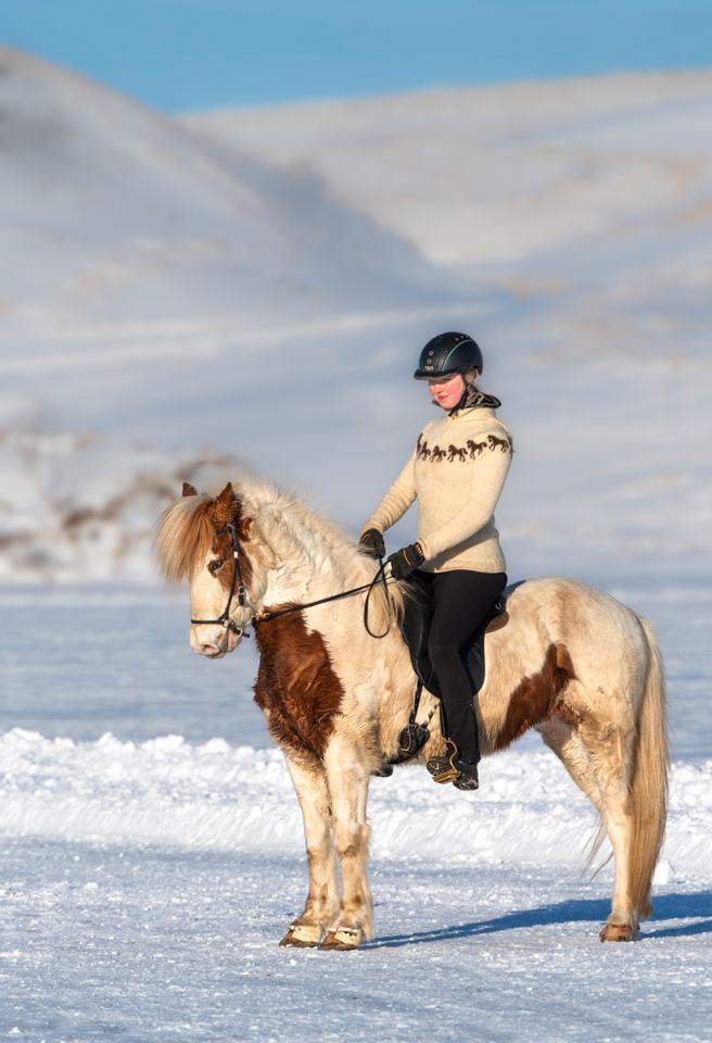 Iceland Winter Photo Tour Recap Icelandic Horse