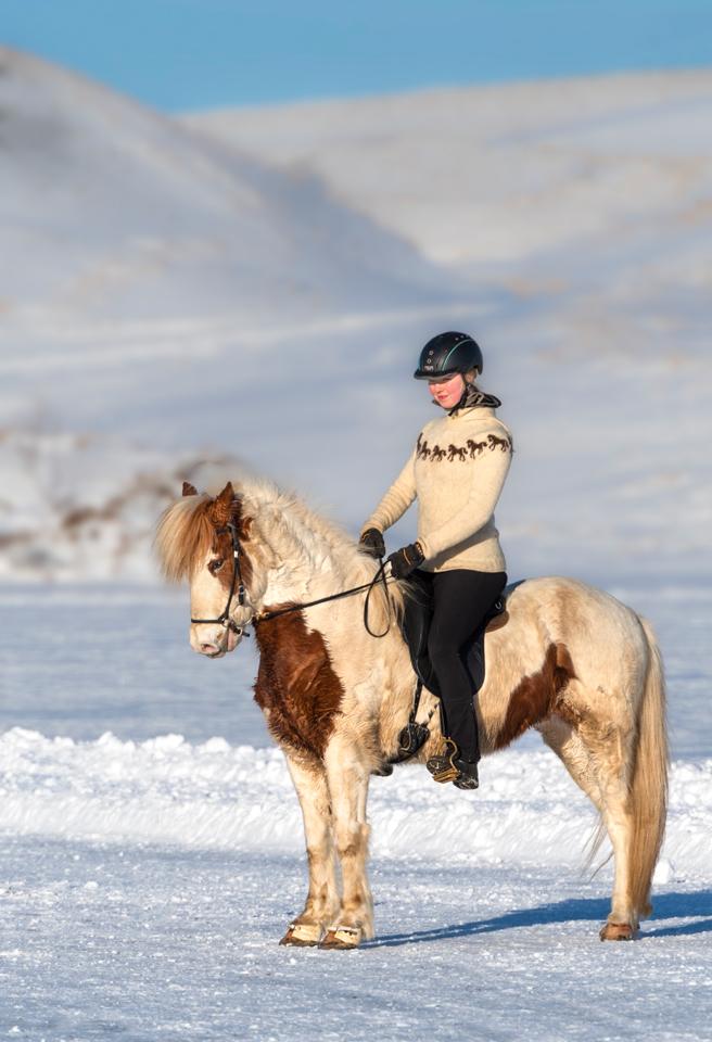 Iceland Winter Photo Tour Recap Icelandic Horse
