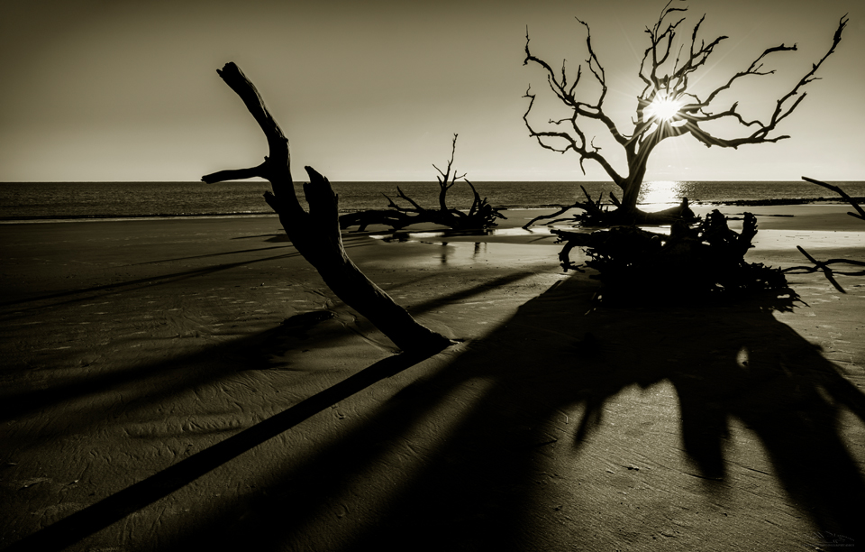 Jekyll Island's Driftwood Beach Photography Tips