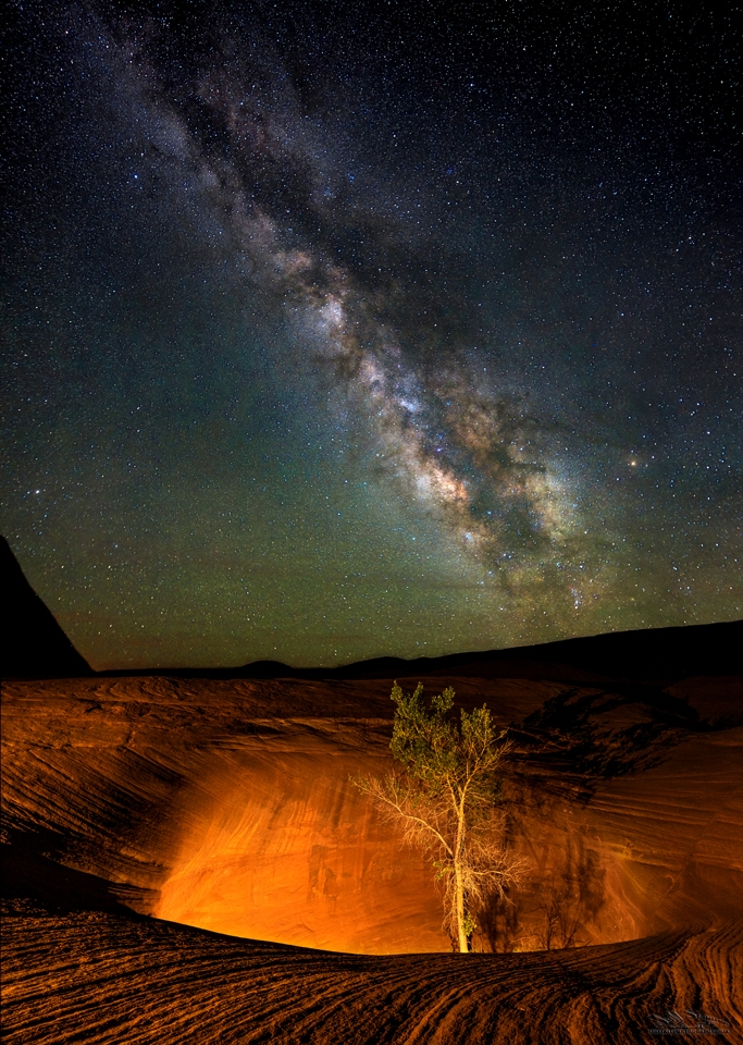 """""""The Lonely Tree"""" in the Pothole at Dancehall Rock Escalante Milky Way"""