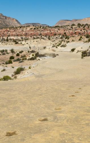 Twenty Mile Dinosaur Trackway near Escalante