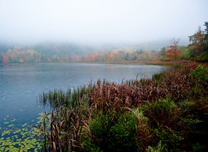 On Misty Pond